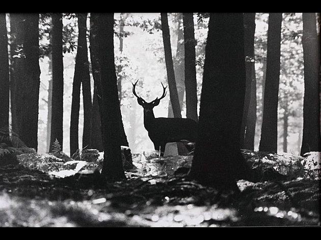 Photos en noir et blanc