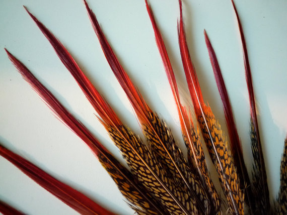 GOLDEN PHEASANT FEATHERS with red tips / 528 by KIMONOS on Etsy