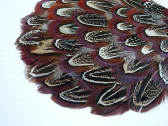 FEATHER PAD Pheasant Ringneck feather /54 by KIMONOS on Etsy