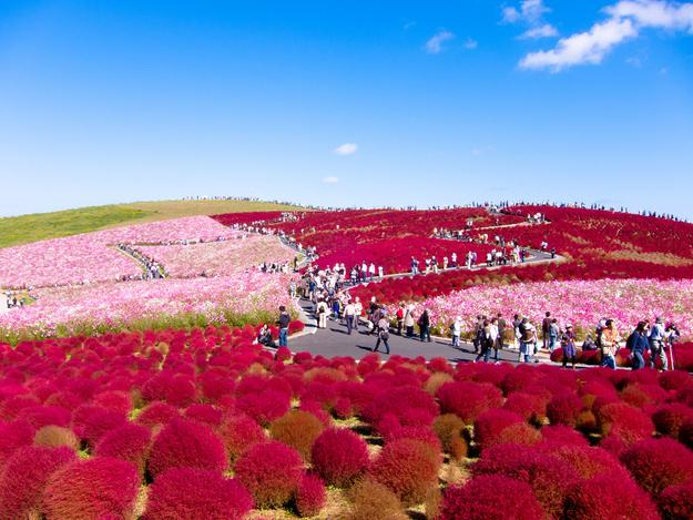Japanese Park Matches Flowers To Sky