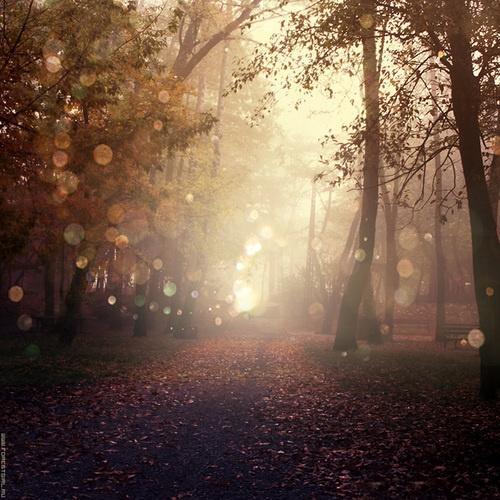 Beauty. / Autumn trees.