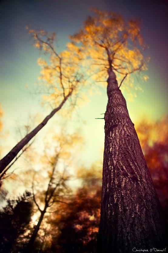 Autumn / Autumn Trees
