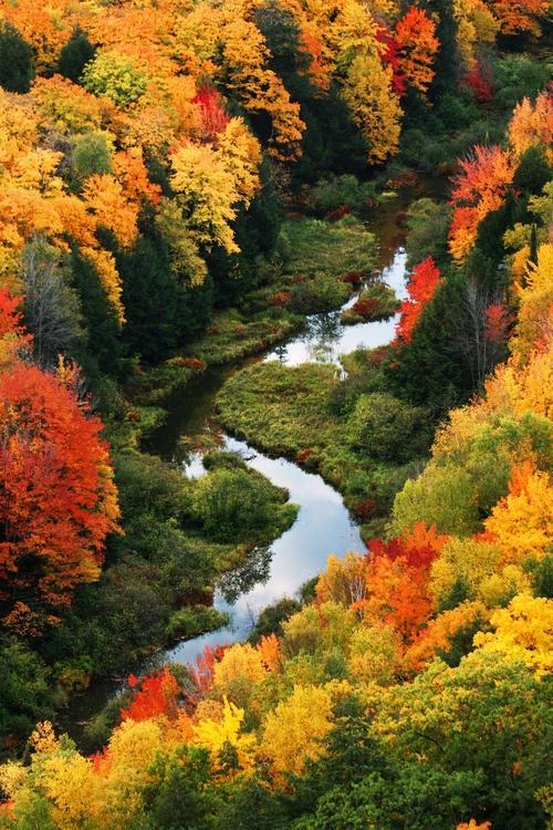 fresh air / autumn trees