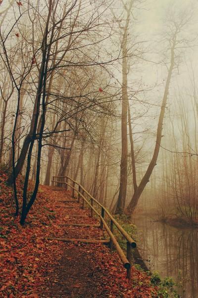 Autumn Things / Autumn trees