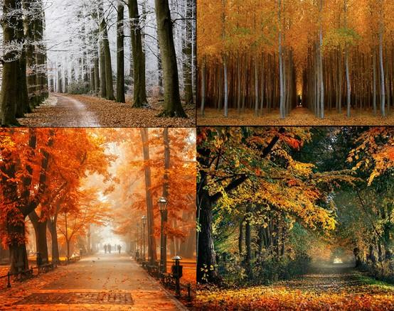 Pretty things / more gorgeous Autumn trees