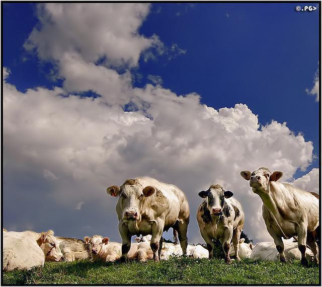Animals Photography by Edgar Thissen