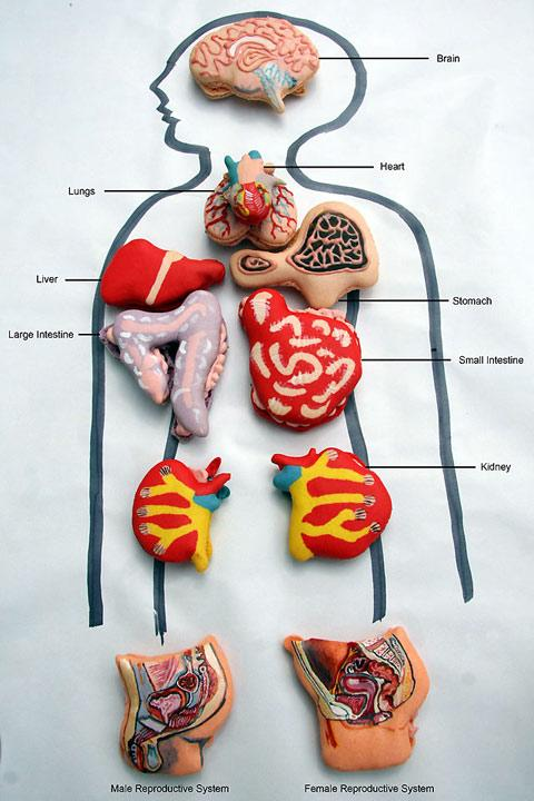 Miss Cakehead's anatomical macarons — Lost At E Minor: For creative people