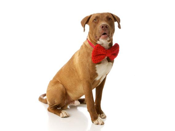 The JumBow Bow Tie for Dogs Shown in Red by CharlieHeartsDiesel