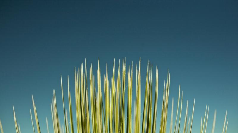 grass,skyscapes grass skyscapes 2560x1440 wallpaper – grass,skyscapes grass skyscapes 2560x1440 wallpaper – Grass Wallpaper – Desktop Wallpaper