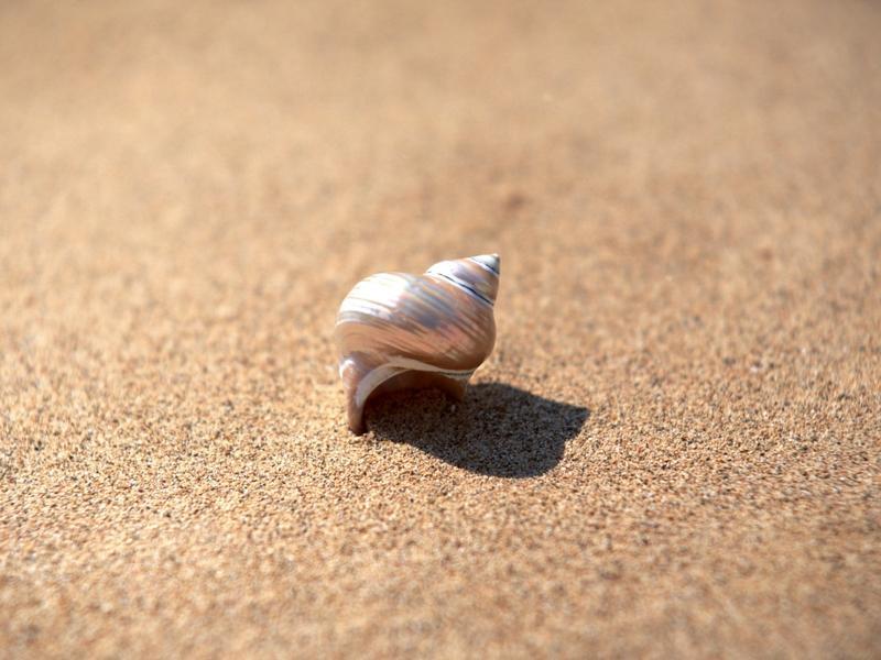sand,seashells sand seashells 1920x1440 wallpaper – sand,seashells sand seashells 1920x1440 wallpaper – Shells Wallpaper – Desktop Wallpaper
