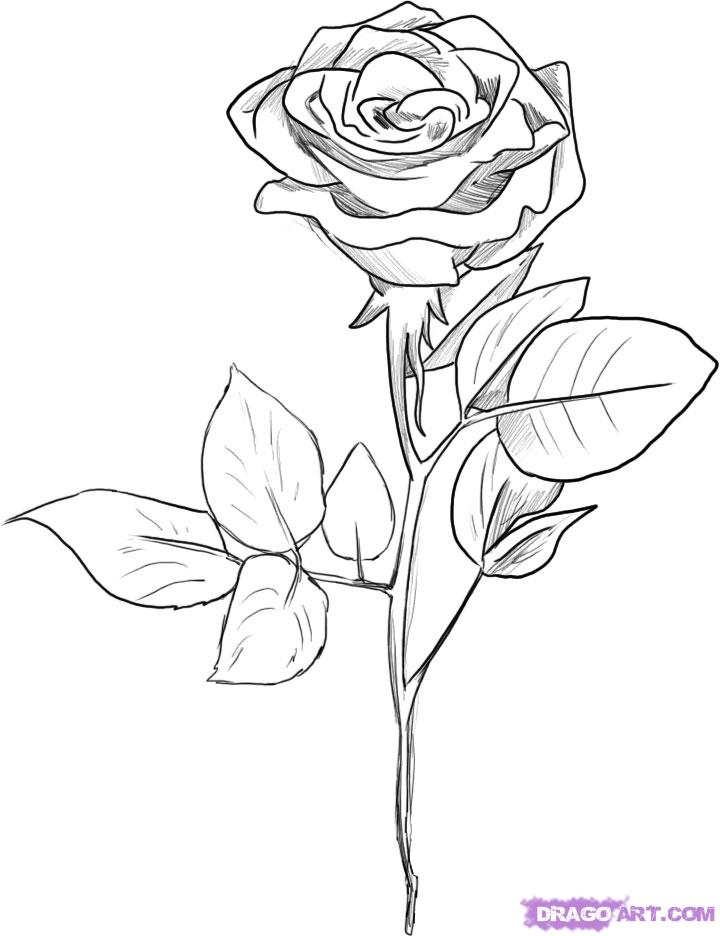 black and white rose drawing 14879 on wookmark ForHow To Draw A Black And White Rose