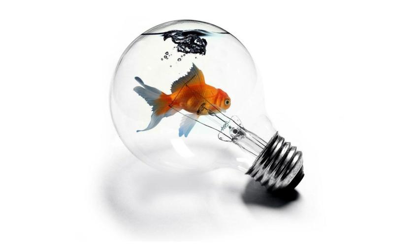 abstract,fish abstract fish light bulbs 1680x1050 wallpaper – abstract,fish abstract fish light bulbs 1680x1050 wallpaper – Fish Wallpaper – Desktop Wallpaper