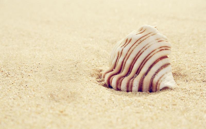 seashells seashells 2560x1600 wallpaper – seashells seashells 2560x1600 wallpaper – Shells Wallpaper – Desktop Wallpaper