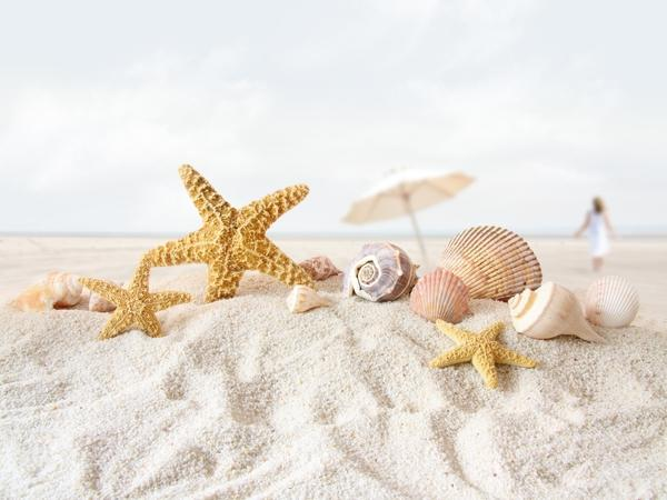 sand,beach beach sand starfish seashells depth of field umbrellas 4752x3568 wallpaper – Beaches Wallpapers – Free Desktop Wallpapers