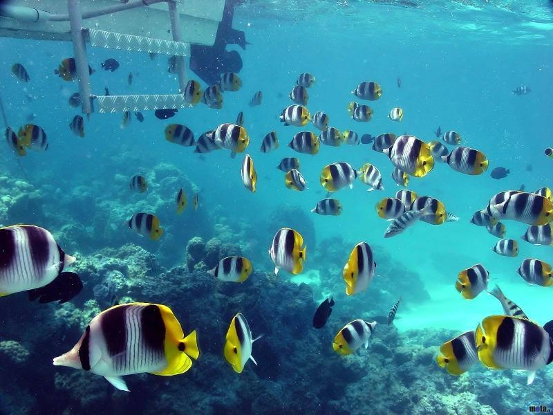 blue,beach blue beach seas fish underwater 1600x1200 wallpaper – blue,beach blue beach seas fish underwater 1600x1200 wallpaper – Fish Wallpaper – Desktop Wallpaper