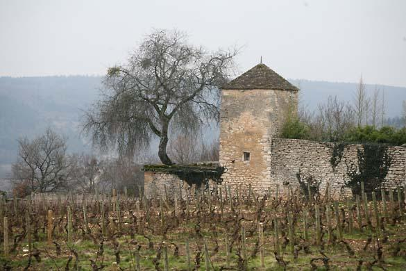 Wine Tasting, Vineyards, in France: Fred Cossard (Burgundy)