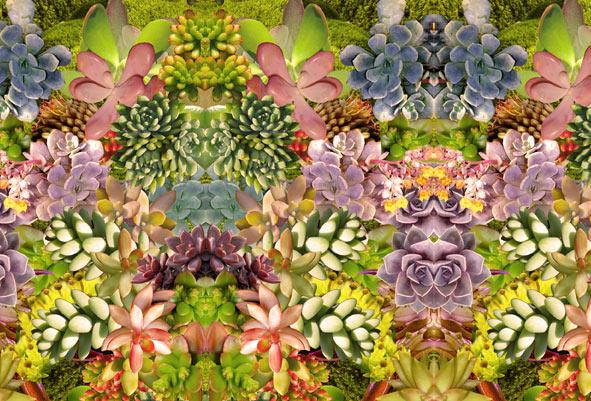 patternpeople_succulents_thumb.jpg (JPEG Image, 591x401 pixels)