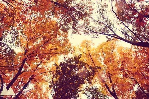 Fall / .
