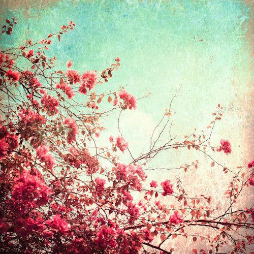 Pink flowers on textured sky Autumn Fall photography by Andrekart