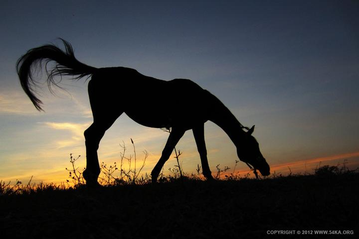 Sunset Horse - 54ka [photo blog]