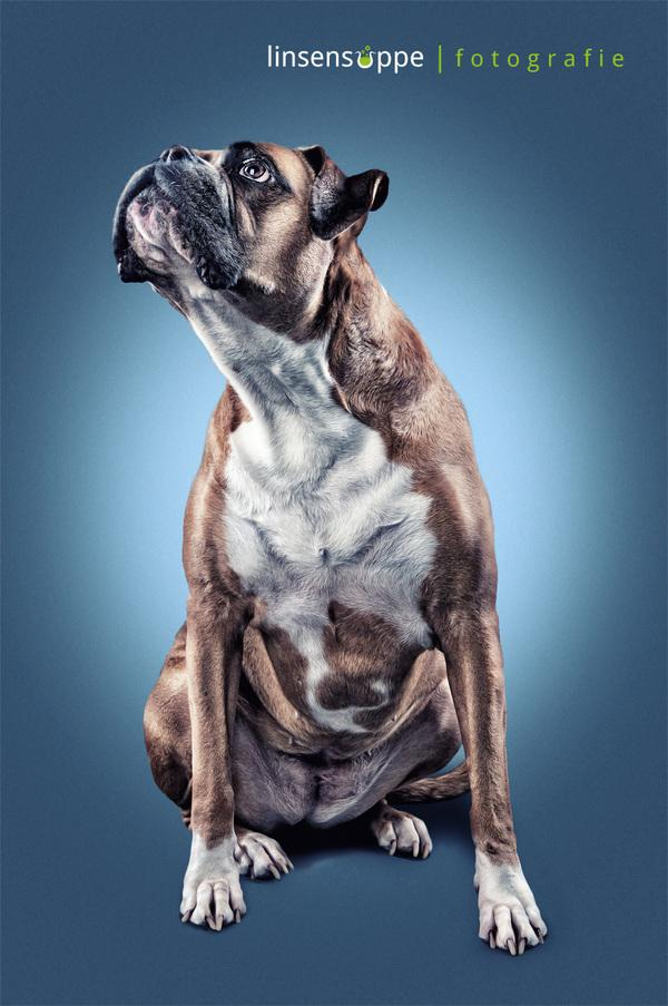 Furry Dog Portraits by Daniel Sadlowski | 123 Inspiration