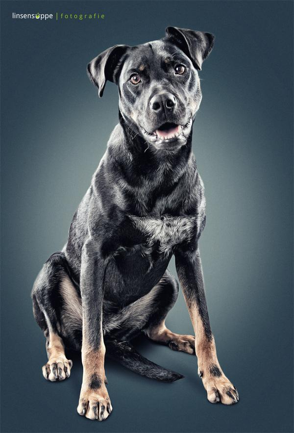 Furry Dog Portraits by Daniel Sadlowski   123 Inspiration