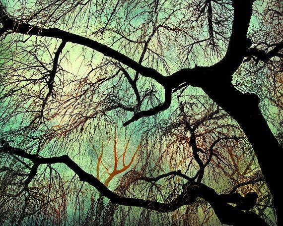 Tree Photography home decor wall art nature by CarlChristensen