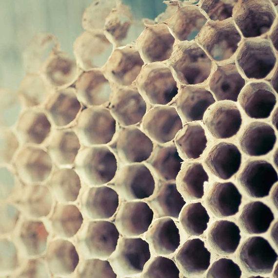Bee hive art honey bee kitchen art cottage by CarlChristensen