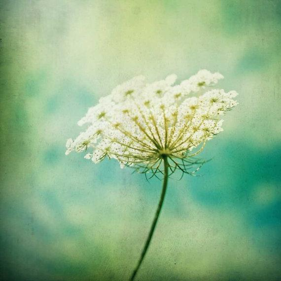 Queen Annes Lace turquoise green sky shabby by CarlChristensen