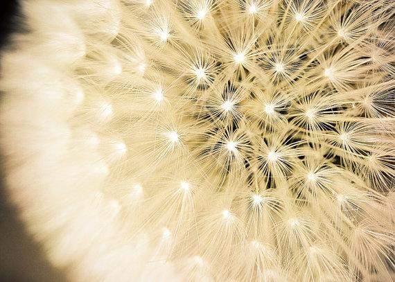 Summer Fireworks Fine Art Photography Print of by KeriBevan