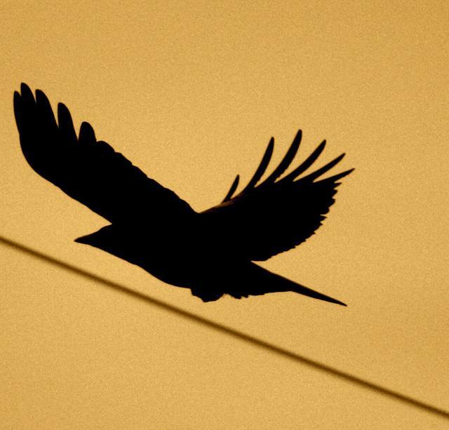 Raven 2 @ Ibaraki, Japan | Flickr – Condivisione di foto!