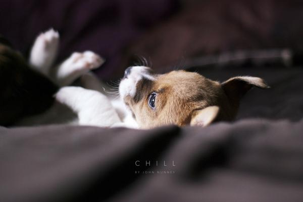 dogs,beds beds dogs brown puppies furry 2048x1371 wallpaper – dogs,beds beds dogs brown puppies furry 2048x1371 wallpaper – Dogs Wallpaper – Desktop Wallpaper