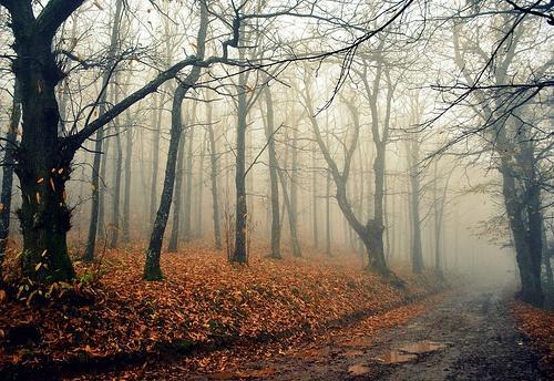 Woods /