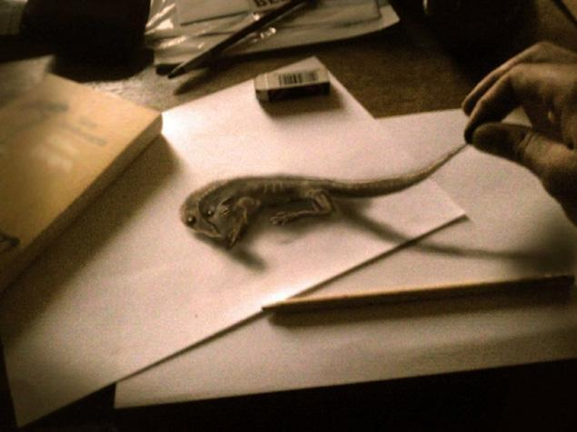Netherlands-based artist Ramon Bruin creates 3-D illusion drawings with paper and pencil - NY Daily News