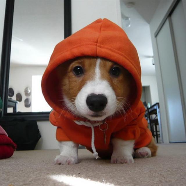 Fancy - Dog Hoodie