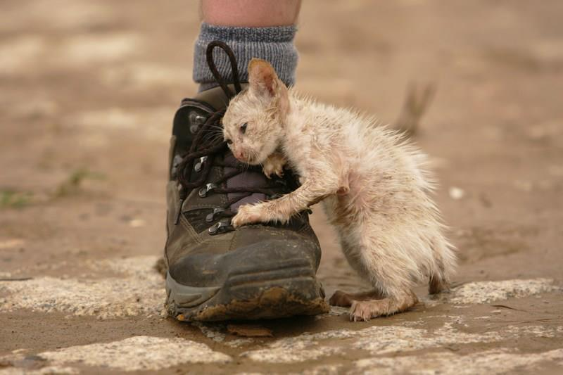 Kitten From October 2011 Floods in Thailand - Imgur