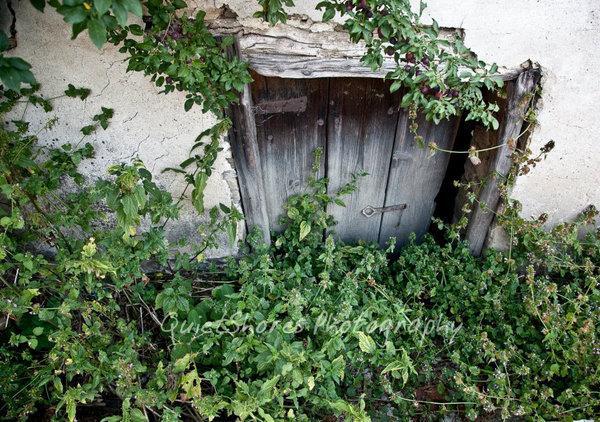 hidden door by ~QuietShores