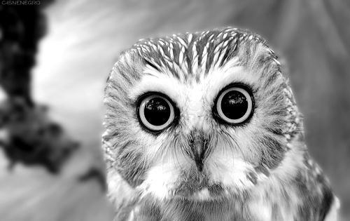 owls. / hi.