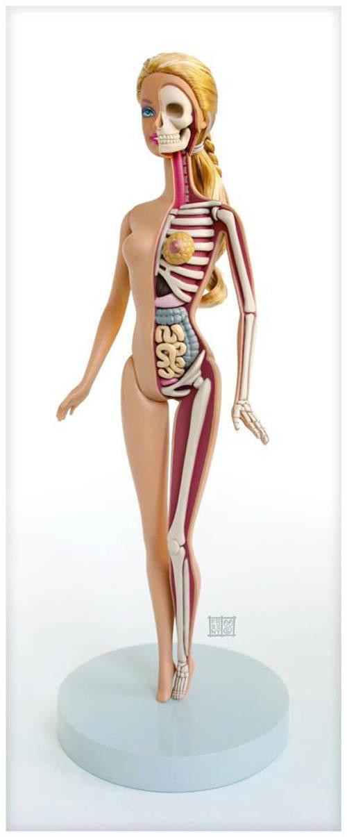 Barbie Anatomy – by Jason Freeny | Ufunk.net