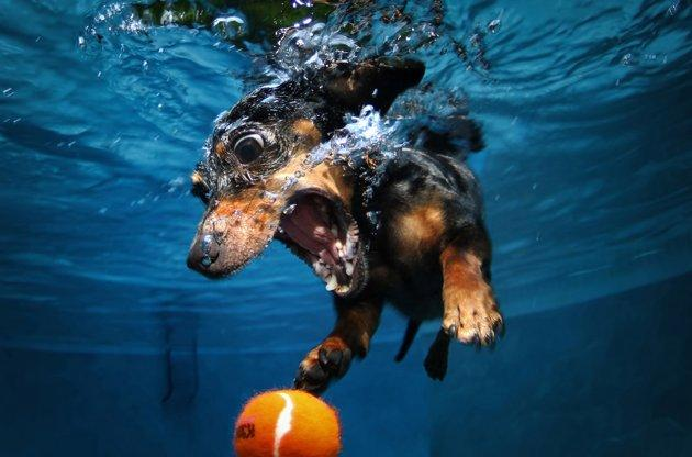 Underwater Dogs | Photo Gallery - Yahoo! News