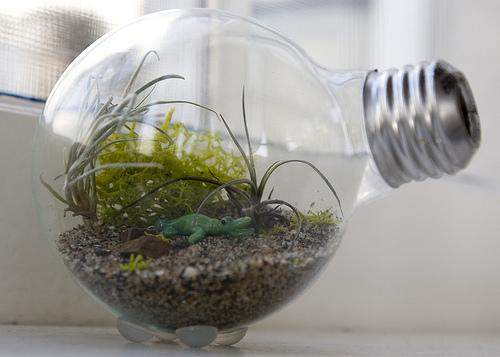 The Hipster Home » Blog Archive » How to Make a Tiny Terrarium in a Light Bulb