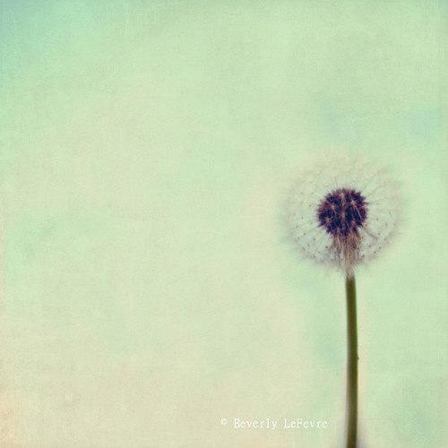 a wish for you dreamy fine art photography by BeverlyLeFevre