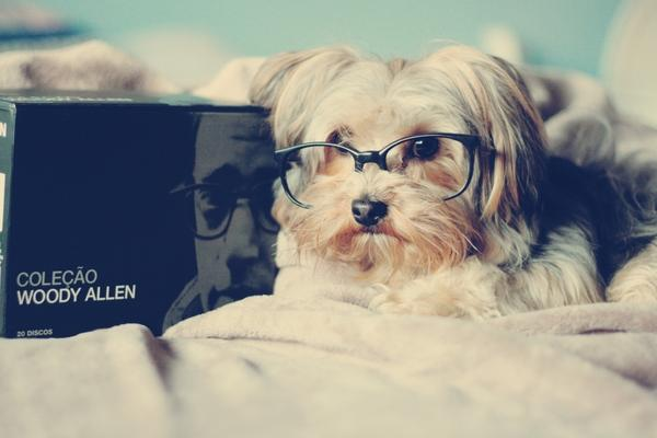 animals,beds animals beds dogs glasses books woody allen pets 3888x2592 wallpaper – animals,beds animals beds dogs glasses books woody allen pets 3888x2592 wallpaper – Dogs Wallpaper – Desktop Wallpaper