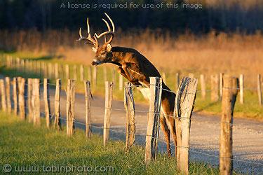 deer-leaping.jpg (375×250)