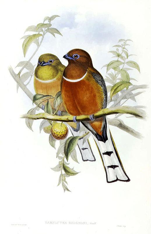 Birds in Love vintage illustration printed on by DejaVuPrintStore