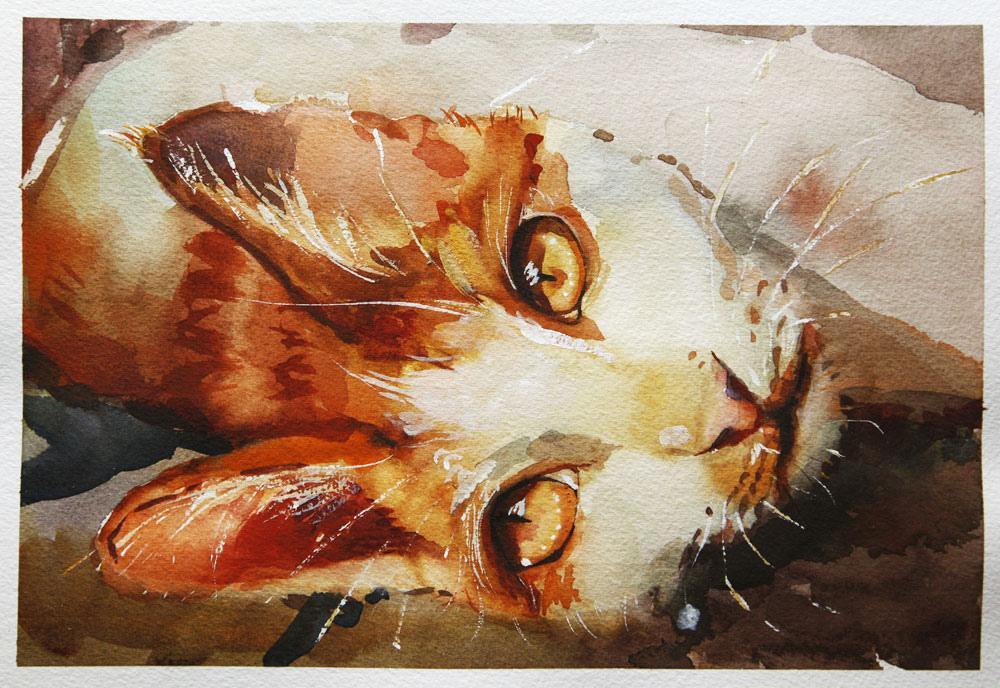Todos os tamanhos | cat | Flickr – Compartilhamento de fotos!