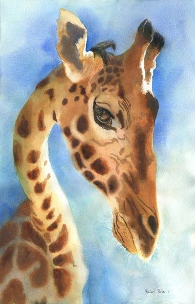 Giraffe Art Original Watercolor Painting Zoo by rachelsstudio
