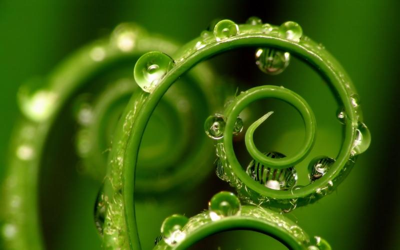 nature,green green nature water drops macro 1680x1050 wallpaper – nature,green green nature water drops macro 1680x1050 wallpaper – Green Wallpaper – Desktop Wallpaper