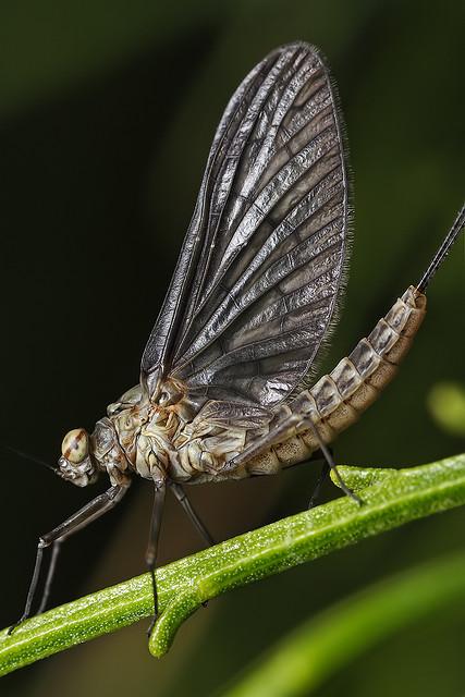mayfly in february   Flickr - Photo Sharing!