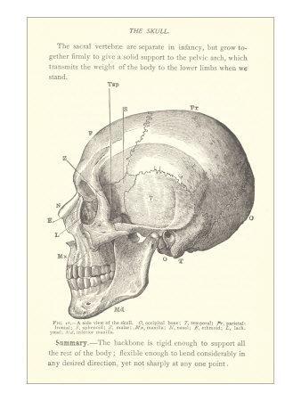 Resultados da Pesquisa de imagens do Google para http://art-canyon.com/images3/vintage-illustration-of-the-skull.jpg